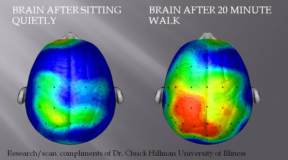 Fuente: Universidad de Illinois